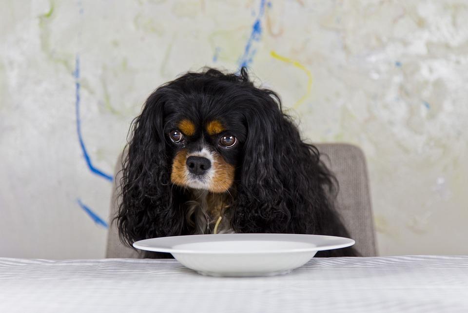 Animaux : rédaction d'un article sur les chiens